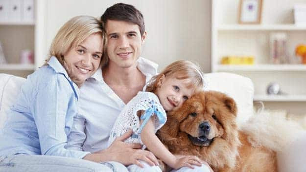 Wills & Trusts dog-young-family Direct Wills Eccleshill